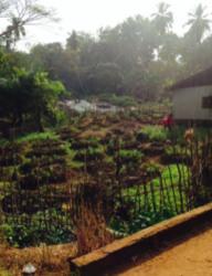 puutarha ETC:ssa